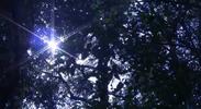 Sunbeam shining through branches of trees_02